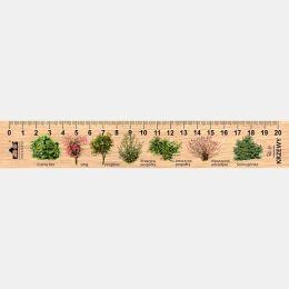 LESs-23 - Krzewy (linijka drewniana)