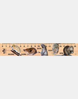 LESs-79 - Duze gryzonie (linijka drewniana)