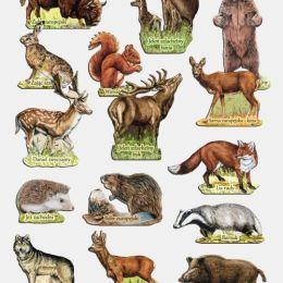 Zestaw magnesów ssaki