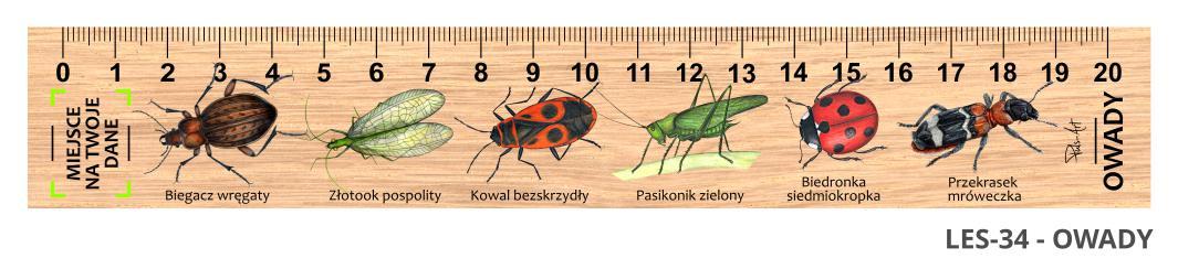 LES-34 - Owady (linijki drewniane)