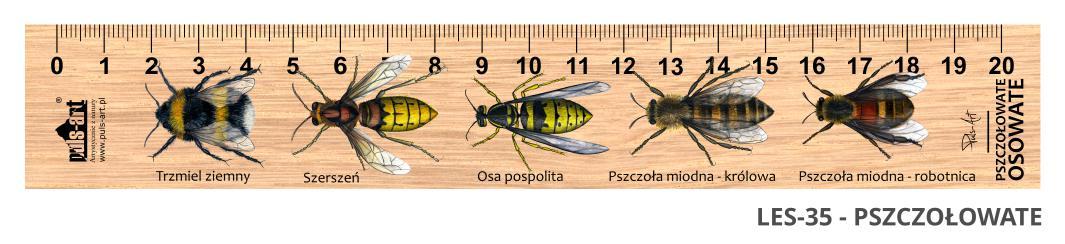 LES-35 - Pszczolowatw (linijka drewniana)