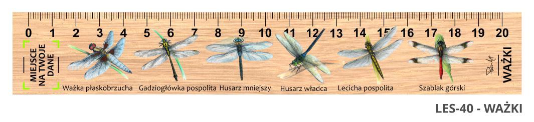 LES-40 - Wazki (linijka drewniana)