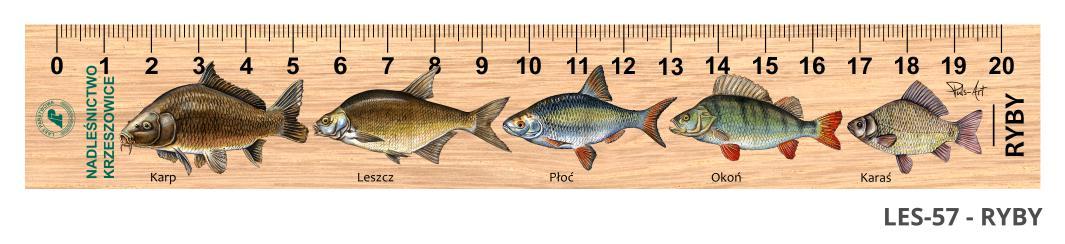 LES-57 - Ryby (linijki drewniane)
