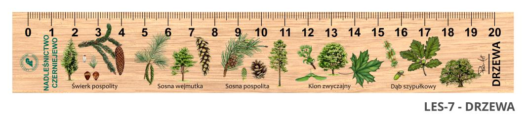 LES-7 - drzewa (linijka drewniana)