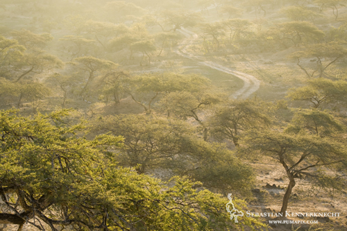 Road dissecting forest, Hawf Protected Area, Yemen