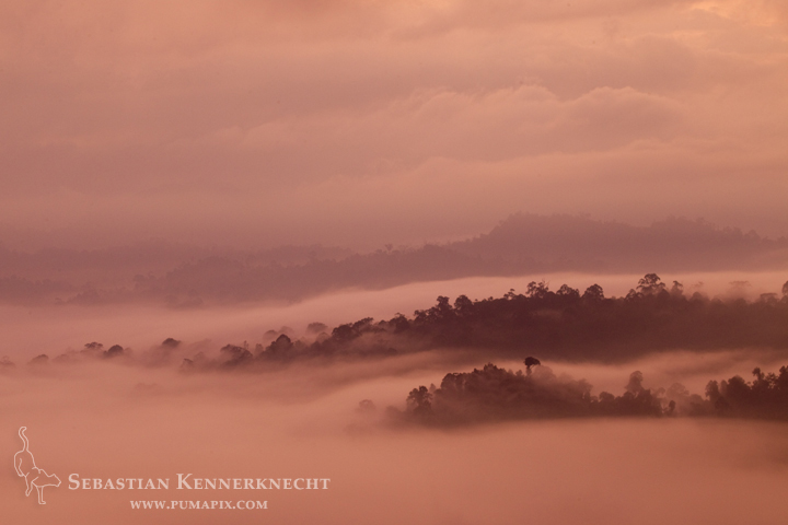 Rainforest in mist at sunrise, Danum Valley Conservation Area, Sabah, Borneo, M
