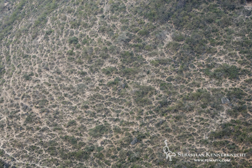 Livestock paths on mountain side, Hawf Protected Area, Yemen