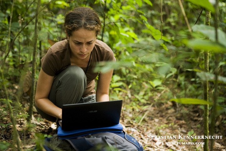 African Golden Cat (Profelis aurata aurata) biologist Laila Bahaa-el-din reviewing camera trap images on computer, Lope National Park, Gabon