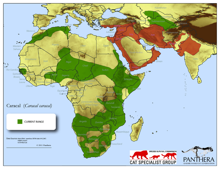 Overall Caracal range with the Arabian Caracal range denoted in red - Copyright Panthera and IUCN Cat Specialist Group