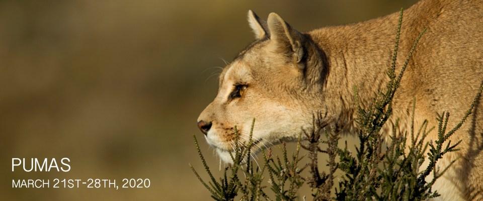 Puma Photography Tour