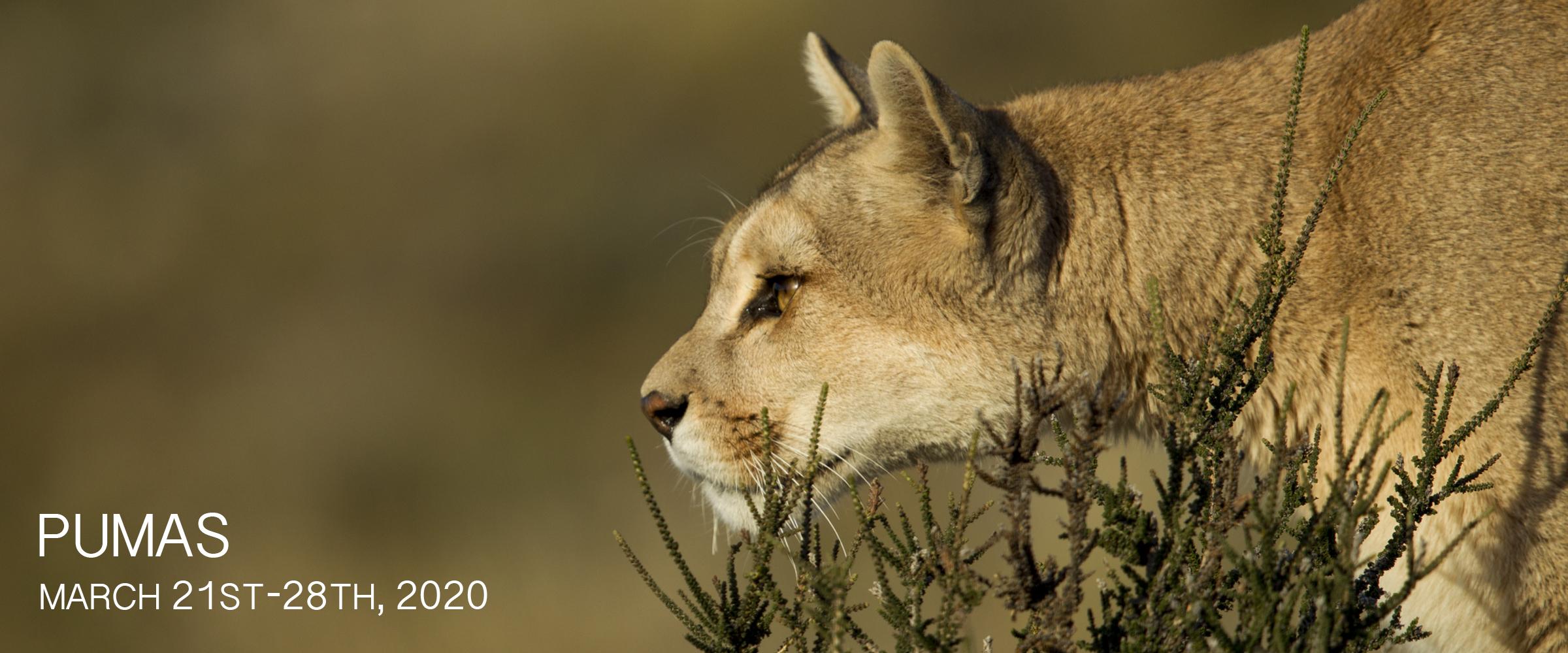 Nouvelles Arrivées 2995e 91960 Puma Photography Tour 2020 - Sebastian Kennerknecht ...