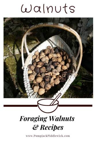 Walnuts - Foraging and Recipes at PumpjackPiddlewick