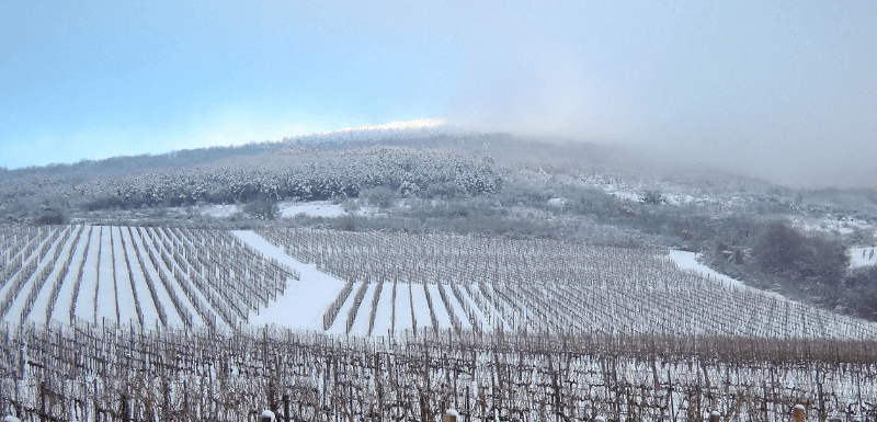 Winter in the Vineyard with Pumpjack Piddlewick