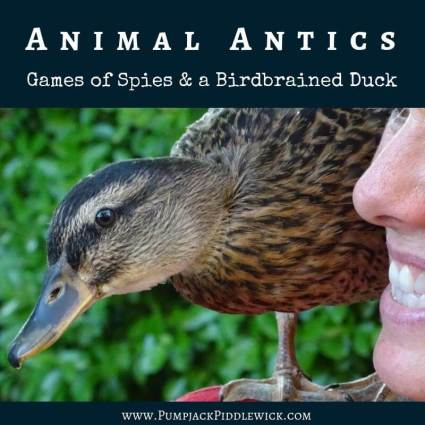 Animal antics - game of spies and a birdbrained duck at PumpjackPiddlewick