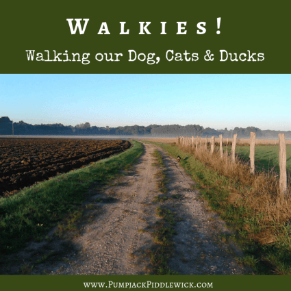 Dog walkies, along with cats and ducks too at PumpjackPiddlewick