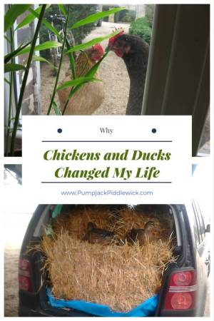 Why Chickens and Ducks Changed My Life at PumpjackPiddlewick
