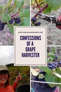 Confessions of a Grape Harvester at Pumpjack & Piddlewick