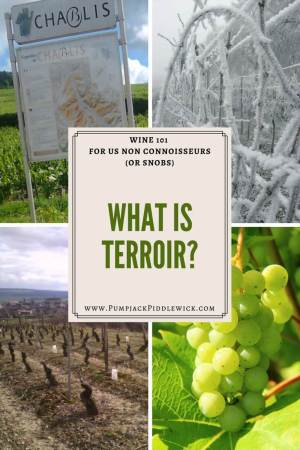 what is terroir wine 101 with PumpjackPiddlewick