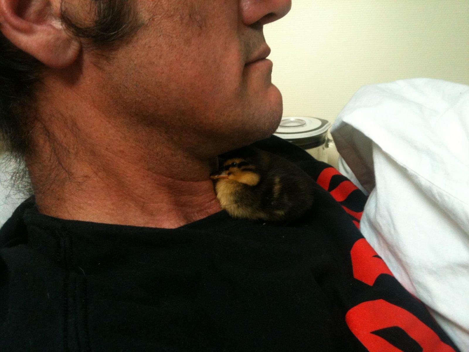 Maggie pet duck sleeping under Pumpjacks chin - Day 4_PumpjackPiddlewick