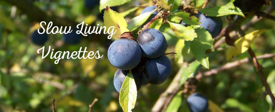 Foraging for sloes on our dog walk at PumpjackPiddlewick