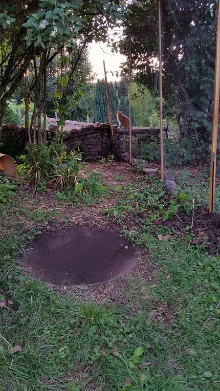 The concrete bowl uncovered in the duck enclosure at PumpjackPiddlewick