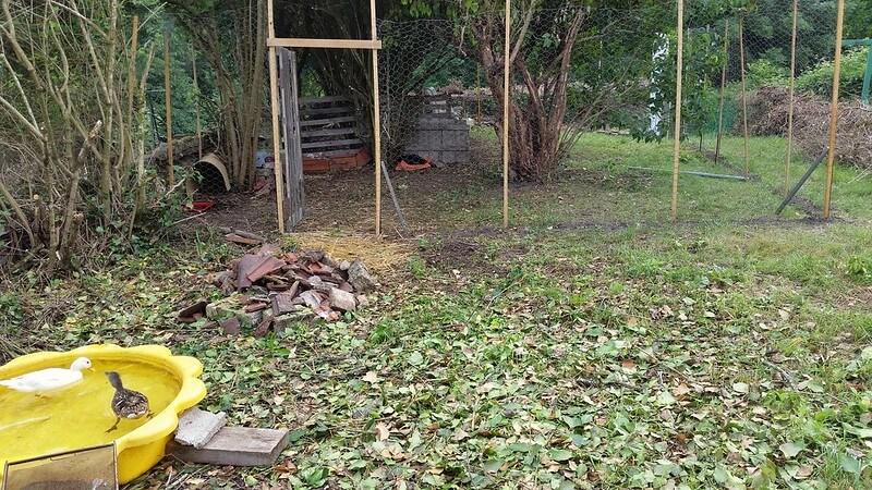Building the duck enclosure at PumpjackPiddlewick