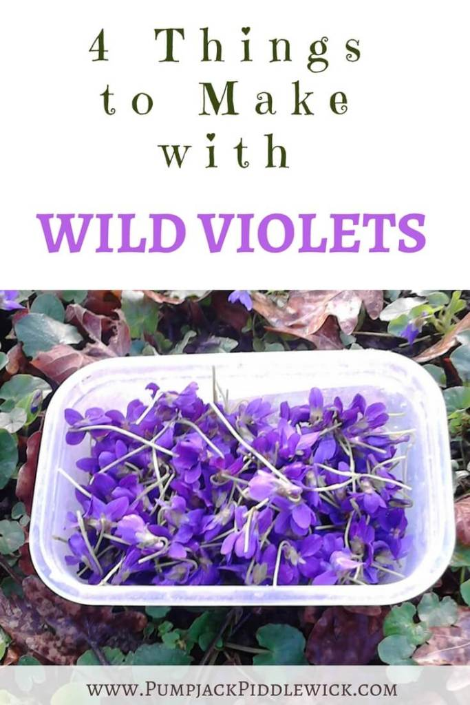 Foraging for violets and what to do with them from PumpjackPiddlewick