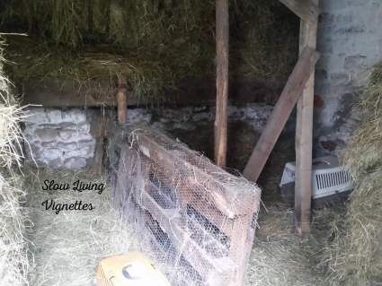 making hay fit in our stable duck bedroom at PumpjackPiddlewick