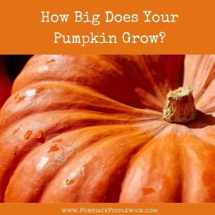 How to use up your Halloween Pumpkin at PumpjackPiddlewick