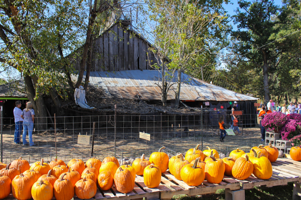 Kids barn 3 (1 of 1)