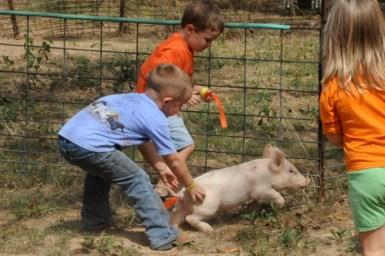 pig scramble5 (1 of 1)