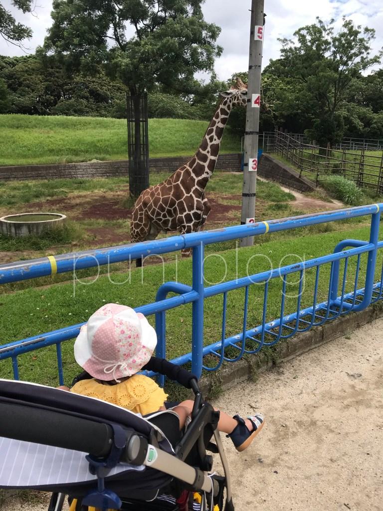 キリン_千葉市動物公園
