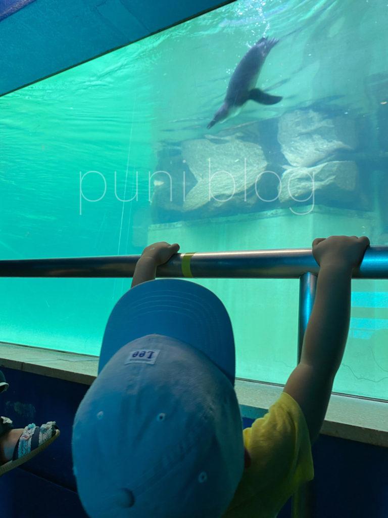 水中ペンギン_千葉市動物公園