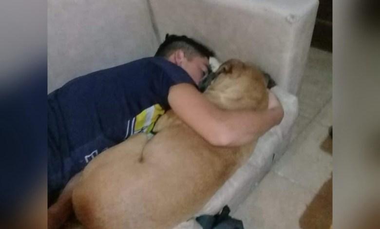 Photo of Perrita muere en los brazos de su dueño a causa del ruido de la pólvora