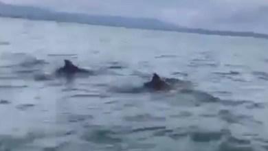Photo of Turistas disfrutaron de un avistamiento de delfines cerca del Faro de Puntarenas