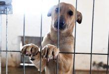 Photo of ¿Sabías que puedes denunciar el maltrato animal en Costa Rica? Aquí te contamos cómo hacerlo