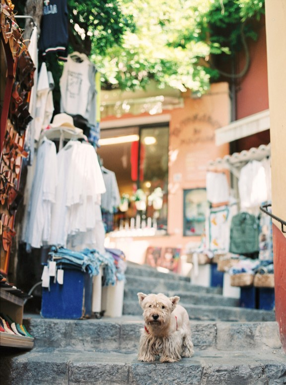 A street with a dog in Positano