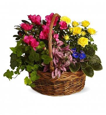 cestino con piantine fiorite