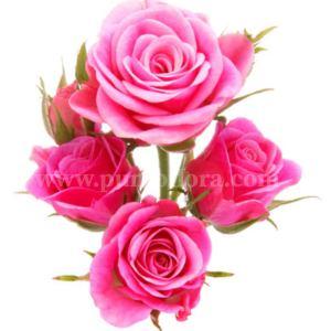composizione di 5 rose rosa