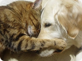 Cat & Dog Cuddle