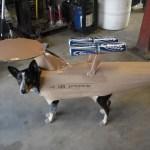 WTF: Perro disfrazado de Enterprise