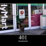 Errores gatunos HTTP
