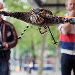 El gato volador – Literalmente [Vídeo]