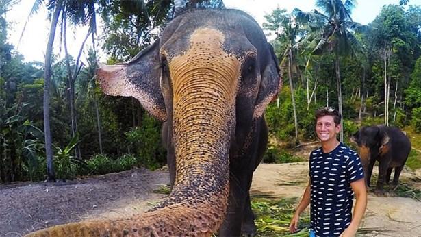 elefante saca elfie