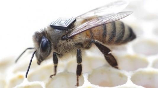 micro sensores abejas