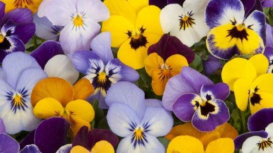 flores para invierno