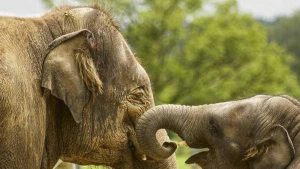 """Oggi in TV:  """"24/7 Wild"""" su Rai5 (canale 23) - Storia di un elefante"""