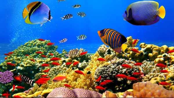 """Oggi in TV: """"Wildest Pacific"""" con Rai5 (canale 23) - Isole"""