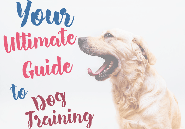 How to train your dog
