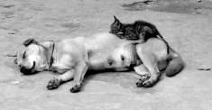 Puppies and Flowers : 3-Year-Old Dog Nurses Stray Kitten